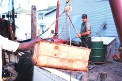 Offloading the catch from a shrimp boat Photo