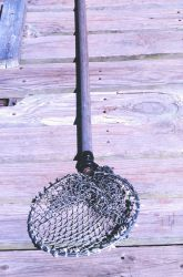 Net used to capture soft-shell