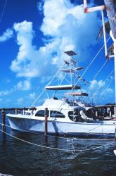 A trim recreational fishing craft tied up at Bud N' Mary's Marina Photo