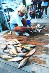 Unloading and distributing a catch of yellowtail snapper Photo
