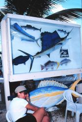 A fish species sampler display adds to the atmosphere of Islamorada Image