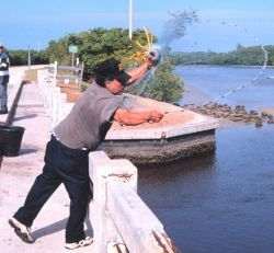 Photo -2 - A fisherman casting his net for mullet and other fish off a bridge south of Everglades City. Photo