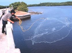 Photo -2a - A fisherman casting his net for mullet and other fish off a bridge south of Everglades City. Photo