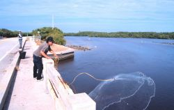 Photo -3 - A fisherman casting his net for mullet and other fish off a bridge south of Everglades City. Photo