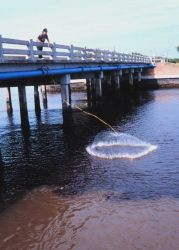 Photo -3b - The waterside view of a fisherman casting his net for mullet and other fish off a bridge south of Everglades City. Photo