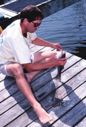 A fisherman catches and releases a small striped bass from the pier at Pirate's Cove. Photo