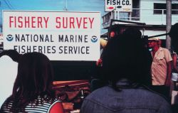 A NMFS sampling station counting fish with cooperation of anglers from headboats Image