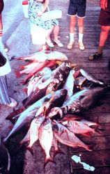 A variety of fish species from a headboat trip ready to be identified, measured, and weighed by NMFS biologists. Image