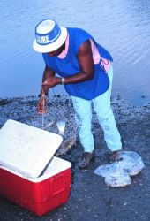 Fishing for blue crabs with traps in a tidal stream Photo