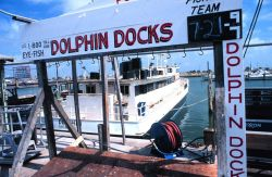 The DOLPHIN awaits another cargo of fishermen for a days' fishing on the Gulf of Mexico Photo