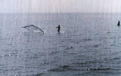 Fisherman casting his net Photo