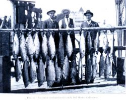A salmon (rod and reel) catch, Del Monte, California Photo