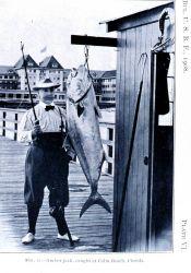 Amberjack caught at Palm Beach, Florida Image