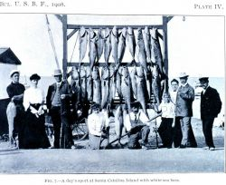 A day's sport at Santa Catalina Island with white sea bass Image