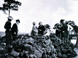 A sponge auction at Anclote Image