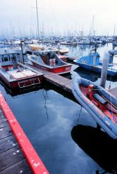 A crowded West Coast sportfishing and commercial fishing harbor Image