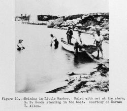 Spencer Fullerton Baird and George Brown Goode seining in Little Harbor Photo