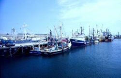 As in ports everywhere, most of the New Bedford fleet operates under moratoriums against new vessels Image