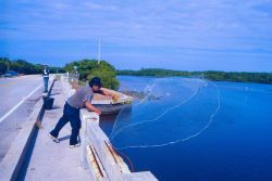 A skilled cast netter aims for a school of mullet off a southeastern causeway. Photo