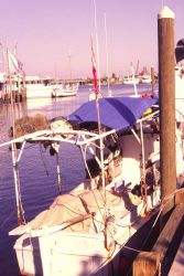 One of Florida's remaining sponge boats returns to Tarpon Springs with the animals drying on a tarp-covered frame. Photo