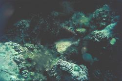 Typical view of bottom in moderate depths Kislaia Bay Photo