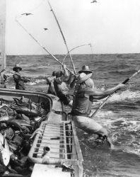 Fishermen catching yellowfin tuna by pole and line fishing Photo