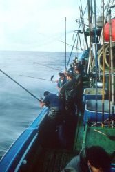 Pole and line fishing on a chartered vessel to catch tuna for tagging Photo