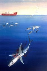 Tuna hooked by pole and line fishing makes easy prey for an opportunistic shark. Photo