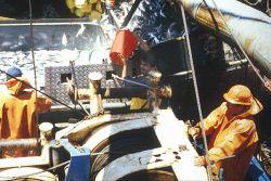 Peruvian scientist taking a chub mackerel (Scomber japonicus) sample on board a fishing boat. Photo