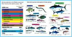 The Mediterranean and Black Seas fall within the same FAO statistical area (Area 37) but, apart from some migratory species, their fisheries and resou Photo