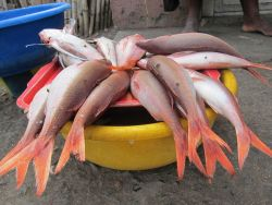 Fish for sale at Sao Tomean street market Photo
