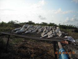 Fish drying on rack in artisinal fishing village Photo