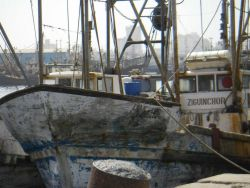 Touring Dakar harbor fisheries vessels observing methods of industrialized fishing in Senegalese waters Photo