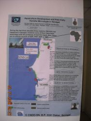English language poster discussing aquaculture and the potential for harmful algal blooms in Senegalese waters. Photo