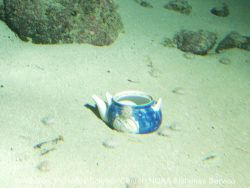 A teapot on the seafloor Photo
