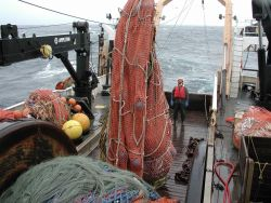 Trawling operations on the NOAA Ship MILLER FREEMAN Lifting the cod end for dumping in sorting bin. Photo