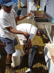 Longline fishing research on the NOAA Ship OSCAR ELTON SETTE Photo