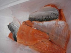 Salmon fillets. Photo