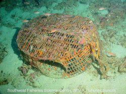 A prawn/fish trap rests on the sea floor at Farnsworth Bank, near Santa Catalina Island in southern California Image