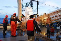 Aleutian wing trawl being hauled in Image
