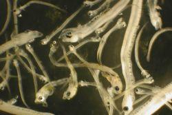 Zooplankton Photo