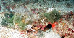 A variety of algae and other organisms. Image