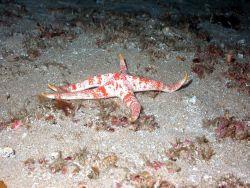 A starfish. Image