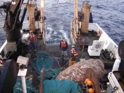A full haul of fish comes on deck during scientific trawling operations on the NOAA Ship DELAWARE II. Image