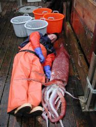 NOAA Fisheries employee Larry Hufnagle lies alongside a large squid (Moroteuthis robusta), during the 2001 west coast groundfish survey aboard the cha Photo