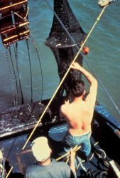 Emptying net of trawl catch Photo