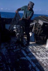 Shrimp trawler emptying catch on deck of shrimp boat Photo