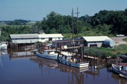 Shrimp boats tied up at pier Photo