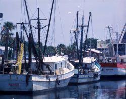 Shrimp boats tied up on Florida east coast. Photo