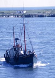 Although hull design is similar to Cape May clam dredgers, the vessel SHARON ANN is rigged as a shrimp trawler. Photo